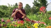 Jak zbierać dzikie rośliny?