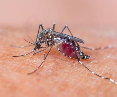 Jak złagodzić ukąszenie komara?