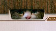 """""""Jak zostać kotem""""  : Kocia klątwa"""
