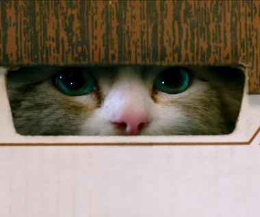 """""""Jak zostać kotem"""" [recenzja]: Kocia klątwa"""