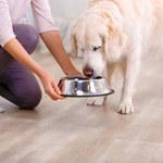 Jak zrobić domowe jedzenie dla psa?