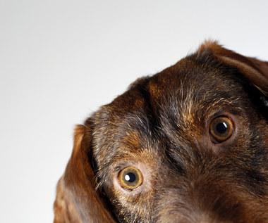 Jak zrobić domowe przysmaki dla psa?
