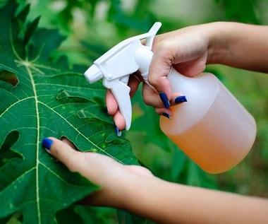 Jak zrobić domowy środek do ochrony roślin?
