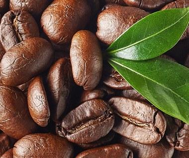 Jak zrobić drzewko kawowe?