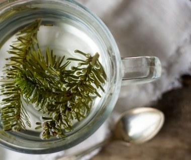 Jak zrobić herbatę z igieł świerku lub sosny?