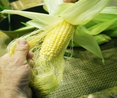 Jak zrobić herbatę ze znamion (wąsów) kukurydzy?