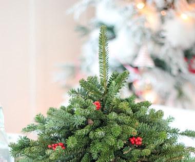 Jak zrobić małą choinkę do dekoracji stołu świątecznego?