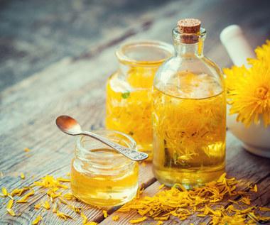 Jak zrobić olejek z mniszka lekarskiego?
