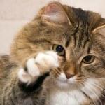 Jak zrobić spray odstraszający koty?