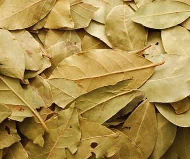 Jak zrobić wywar z liści laurowych na stawy?