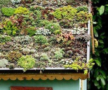 Jak zrobić zielony dach?