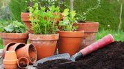 Jak zrobić ziołowy kącik?