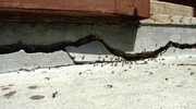 Jak zwalczyć mrówki w ogrodzie?