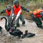 Jak zwierzęta wyczuwają kataklizmy
