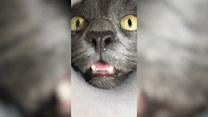 Jaka przeszkoda może stanąć na drodze kota?