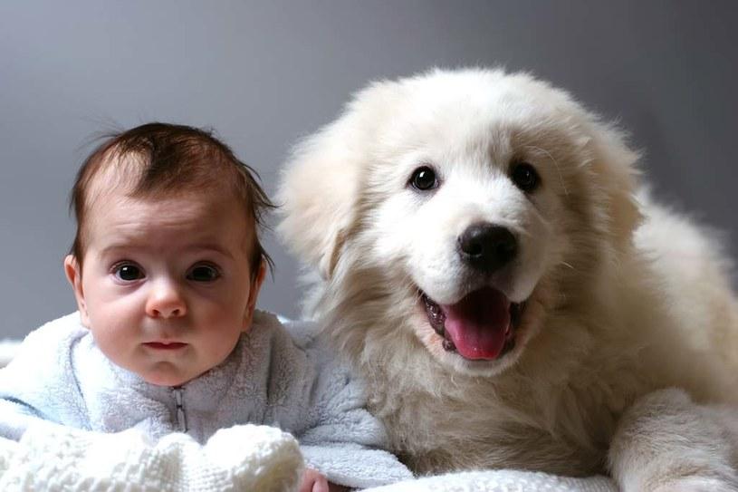 Jaki pies dla rodziny /© Photogenica