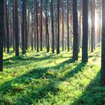 Jakie choroby przenoszą leśne zwierzęta?