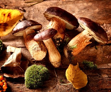 Jakie grzyby można zbierać wczesnym latem, a na jakie uważać?