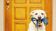Jakie kary obowiązują za niesprzątanie po swoim psie?