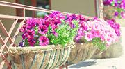 Jakie kwiaty balkonowe są najmodniejsze w tym sezonie?