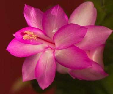 Jakie kwiaty kwitną jesienią i zimą?