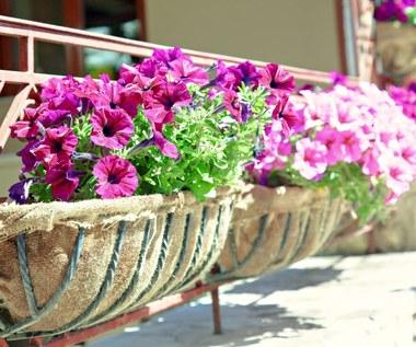 Jakie kwiaty najlepiej wybrać na balkon?