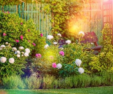 Jakie kwiaty sadzimy jesienią w ogrodzie?