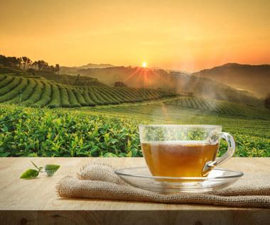 Jakie pestycydy pojawiają się w herbacie? Która jest najbardziej szkodliwa?