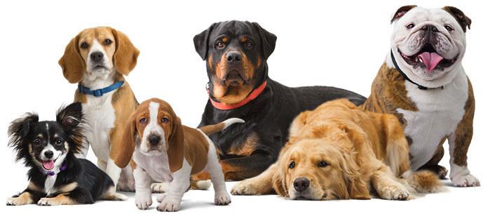 Jakie psy żyją najdłużej /© Photogenica