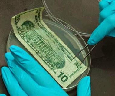 Jakie rodzaje bakterii można znaleźć na pieniądzach?