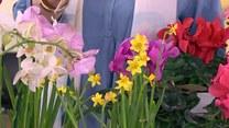 Jakie rośliny domowe zakwitną zimą?