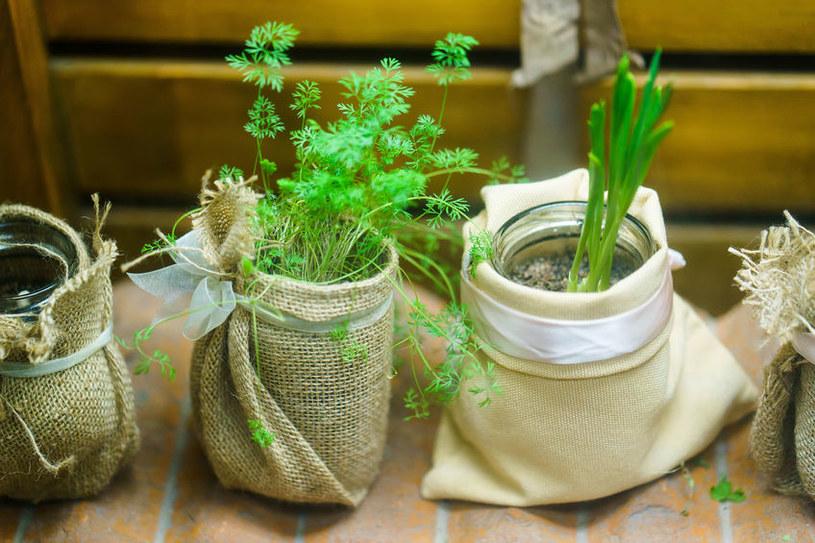 Jakie rośliny odrosną z resztek? /©123RF/PICSEL