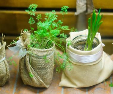 Jakie rośliny odrosną z resztek?