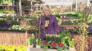 Jakie rośliny ozdobią nasze wnętrza, balkony, tarasy i ogrody?