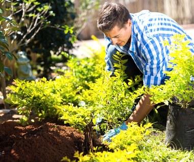 Jakie rośliny sadzimy w kwietniu w ogrodzie?
