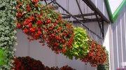 Jakie rośliny sprawdzą się na zacienionym balkonie?