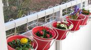 Jakie rośliny wybrać na balkon