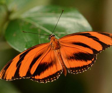 Jakie rośliny zasadzić w ogrodzie, by zwabić motyle?