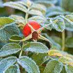 Jakie rośliny zbierać w październiku i listopadzie?