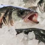 Jakie ryby jeść? Które mogą nam zaszkodzić?