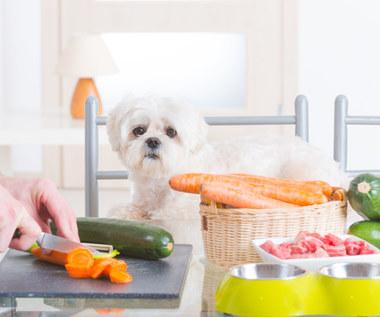 Jakie warzywa dla psa? Lista warzyw, które można podawać psu