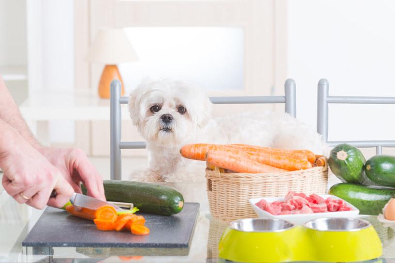 Jakie warzywa można podawać psu? /123RF/PICSEL