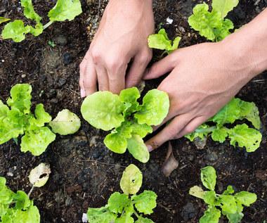 Jakie warzywa zasiać na wiosnę?