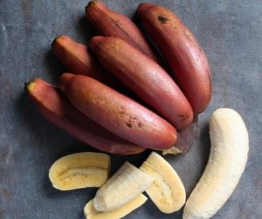 Jakie właściwości odżywcze posiadają czerwone banany?