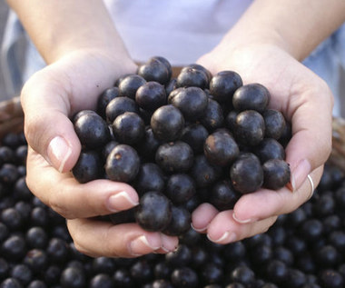 Jakie właściwości zdrowotne mają jagody Acai