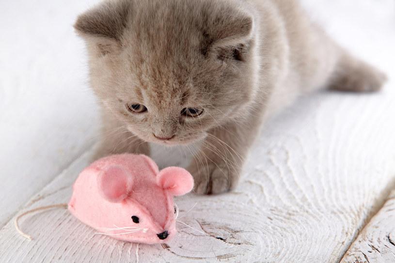 Jakie zabawki wybrać dla kota? fot. AQUAEL /materiały prasowe