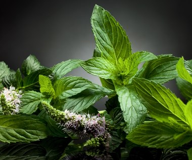 Jakie zioła na ból brzucha?