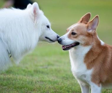 Jakimi chorobami można zarazić się od kota lub psa?