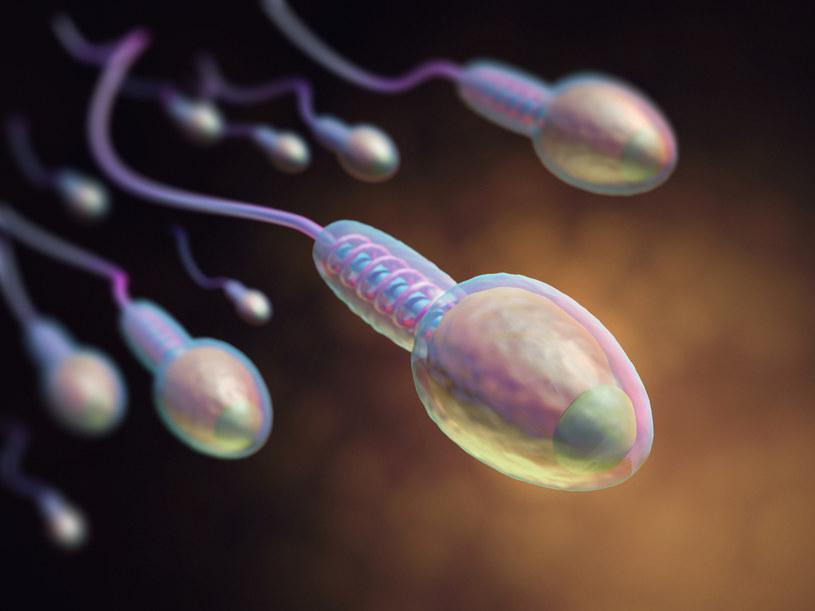 Jakość męskiego nasienia poprawia się po szczepieniach przeciwko COVID-19 - wynika z najnowszych badań /123RF/PICSEL