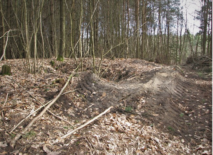 """Jama K5 """"kromlechu"""" zniszczona częściowo przez zrywkę drewna /Odkrywca"""
